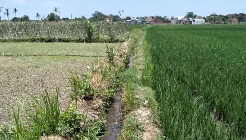 Lahan Pertanian di Kota Mataram