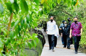 Presiden di dampingi Ibu Iriana Tinjau Hutan Mangrove di Bali bersama rombongan, Jum'at (8/10/2021).